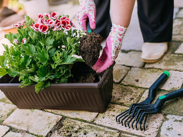 Taimed ja istutus