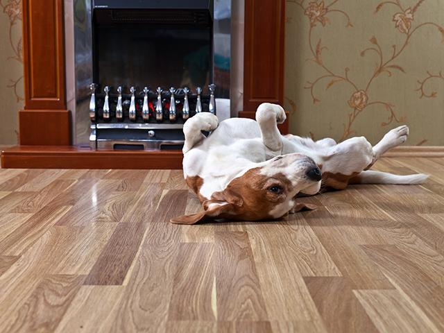 Põrandad ja plaadid