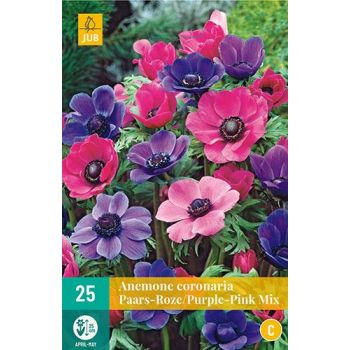 Lillesibul Anemoon Coronaria segu Purple/Pink 15tk