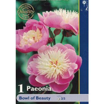 Lillesibul pojeng Bowl of Beauty 8712627062652 12BOWLOFBEAUTYHBM
