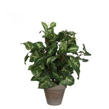 Kunstlill Fittonia potis 35cm