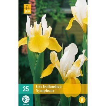 Lillesibul iiris Hollandi Symphony 25tk 8712438625770 166113590
