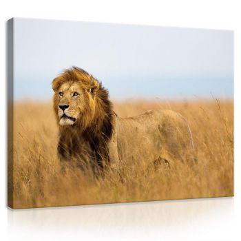 Pilt Lõvi 100x75 5903014164223
