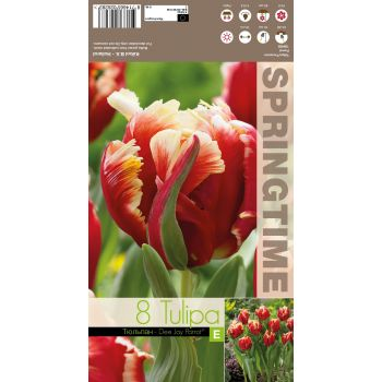 Lillesibul tulp DEE JAY PARROT  UUS!, 8714665026283