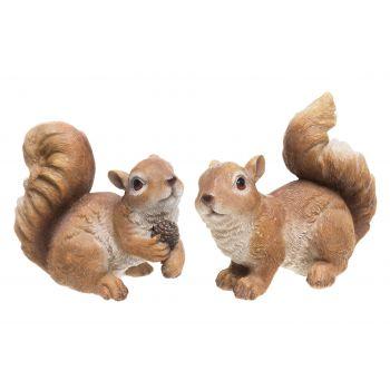 Kuju Orav erinevad