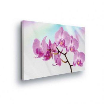 Pilt orhidee 100x75 PP124O1