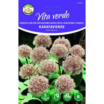 Lillesibul Lauk Allium Karataviense  5tk