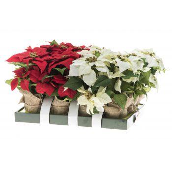Kunstlill Jõulutäht 38cm valge või punane