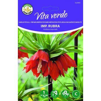 Lillesibul Püvilill Fritillaria Rubra