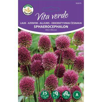Lillesibul Koonuslauk Allium Sphaeroc. 25tk