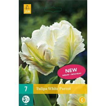 Lillesibul Tulp White Parrot 7tk
