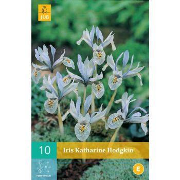 Lillesibul Iiris Katharine Hodgkin 10tk