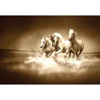 Pilt hobused 100x75