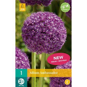 Lillesibul Lauk Allium Ambassador 1tk