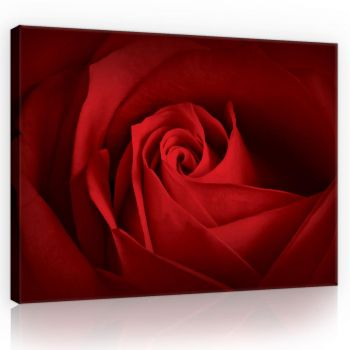 Pilt punane roos 100x75 5902066841762