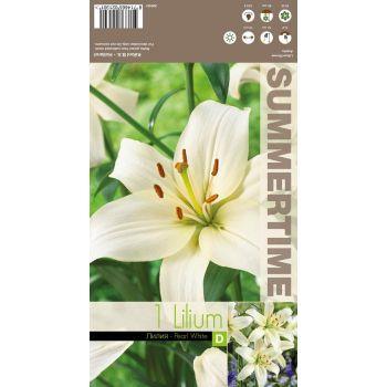 Lillesibul liilia Pearl White aasia 3tk 8714665021301 12PEARLWHITE