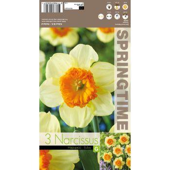 Lillesibul nartsiss BULLEY UUS!, 8714665026207