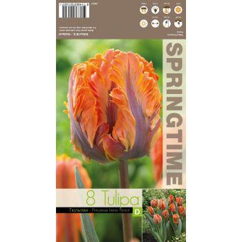 Lillesibul tulp PRINSES IRENE PARROT triumf, 8714665021325