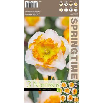 Lillesibul nartsiss LOVE CALL, 8714665020441