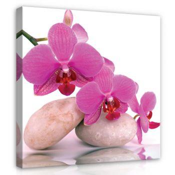 Pilt orhidee 80x80 PP136O2