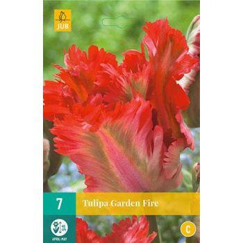 Lillesibul Tulp Garden Fire 7tk