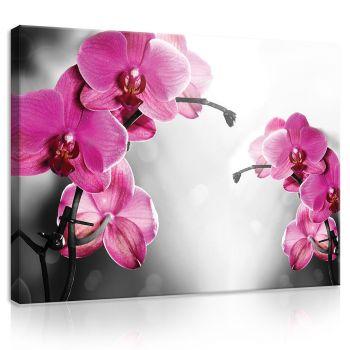 Pilt orhidee 100x75 PP421O1