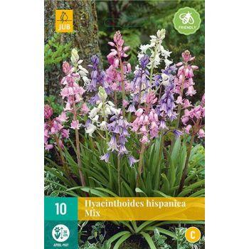 Lillesibul Ebahüatsint Hyacinthoides Hispanica Mix 10tk