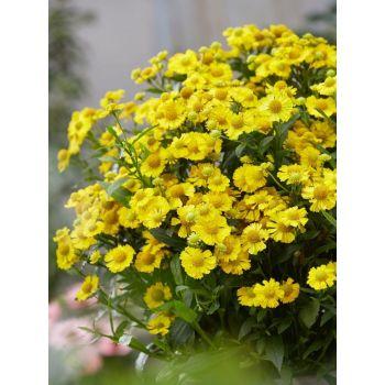 Taim Heleenium Lemon Sundae 4741474448832