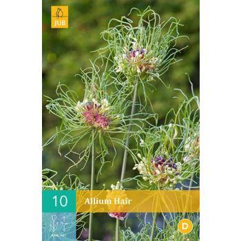 Lillesibul Lauk Allium Hair 10tk