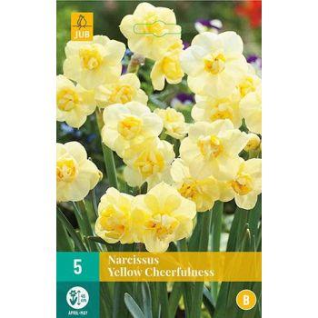 Lillesibul Nartsiss Yellow Cheerfullness 5tk