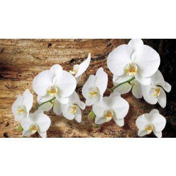 Pilt orhidee valge 100x75