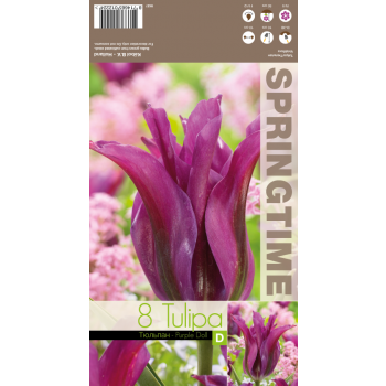 8714665012224 Lillesibul Tulp Purple Doll