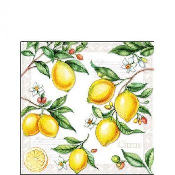 Salvrätik Citrus 25x25cm 8712159143447