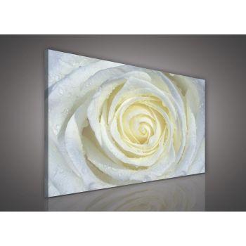 Pilt valge roos 100x75 5901383471645