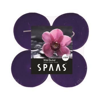 Teeküünal Maxi 4tk metsik orhidee 5411708154288