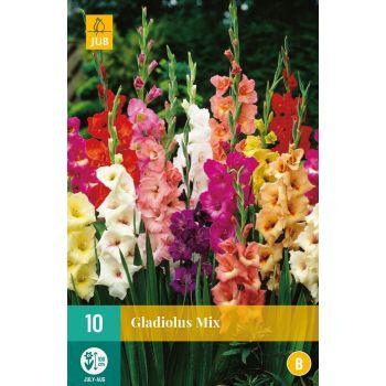 Lillesibul gladiool mix 10tk 8712438617607 1661760
