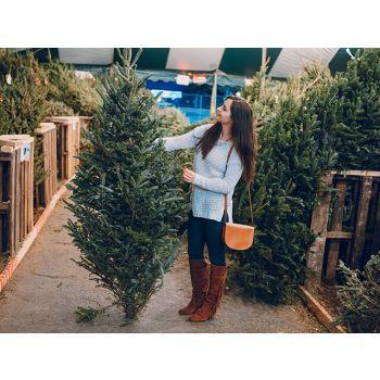 Jõulupuu valimine