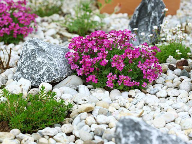 Kiviktaimla ehk kaunis mägiaed Inglismaalt