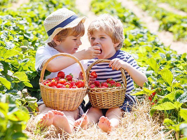 Maasikakasvatamise kunst