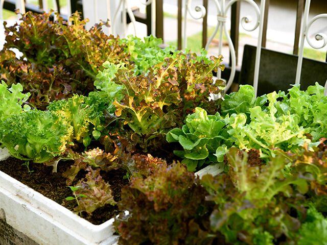 Võitlus taimehaigustega