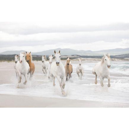 Fototapeet 8-986 horses
