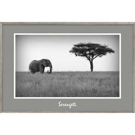 Pilt Afrika 60x90cm