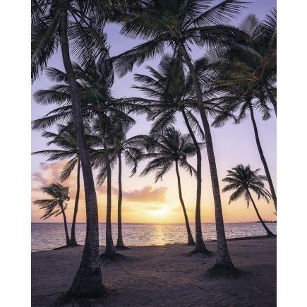 Fototapeet SH022-VD2 Palmtrees on Beach